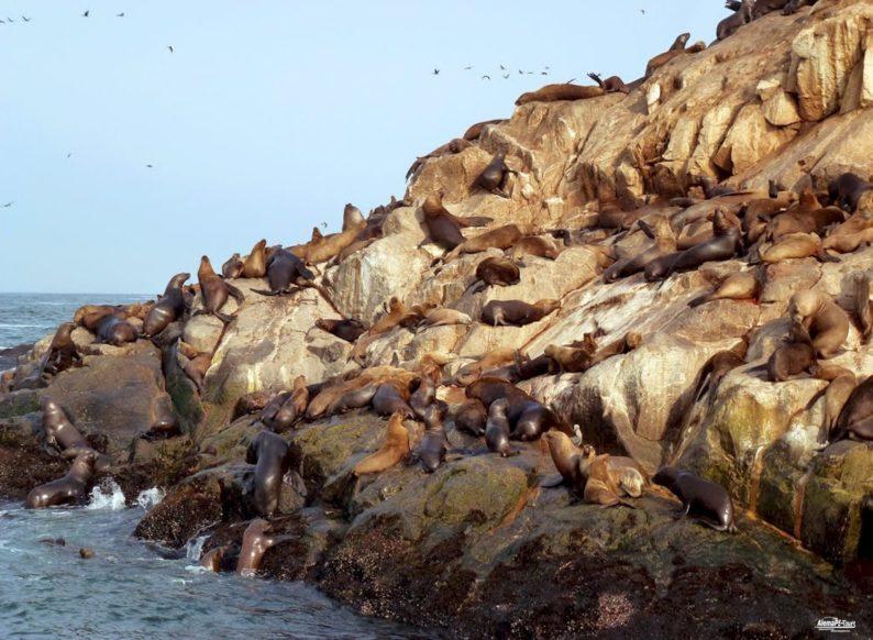 Callao - Islas Palomino