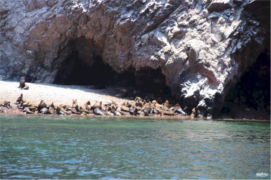 Ballestas Islands - 2 hour boattrip