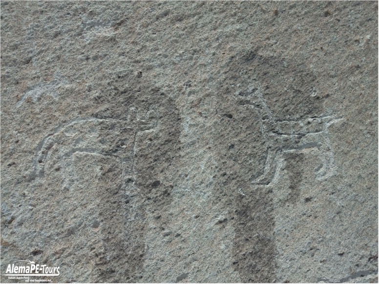 Corire - Toro Muerto